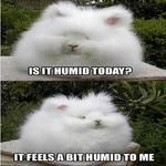 It Appears To Be Quite Humid Today