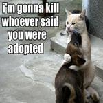 Who Said You Were Adopted?