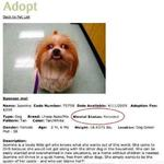 Adopt Jasmine