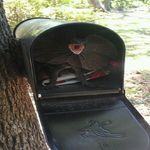 why don't you get the mail