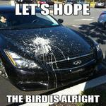 That had to be a hell of a bird
