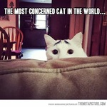 most concerned cat in the world