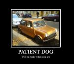 Patient Dog