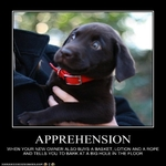 Apprehension