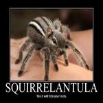 squirrelantula